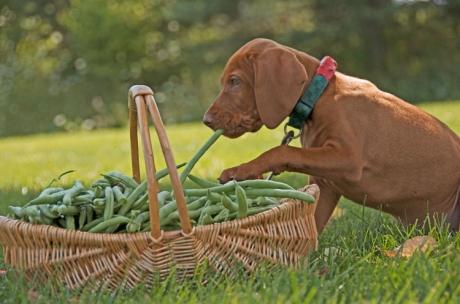 Stealing a bean