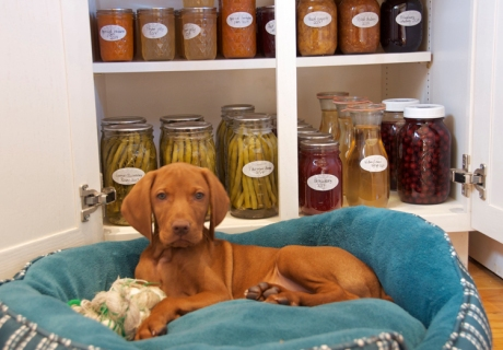 Guarding the jars