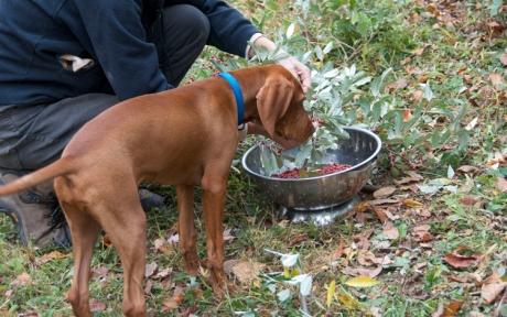 Laszlo and autumn berries