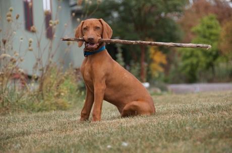 Laszlo with stick