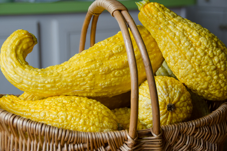 Yellow crookneck in basket