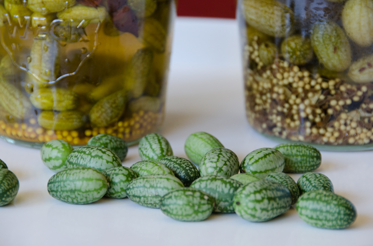 Mexican sour gherkins aka mouse melons